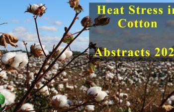 Heat Stress in Cotton