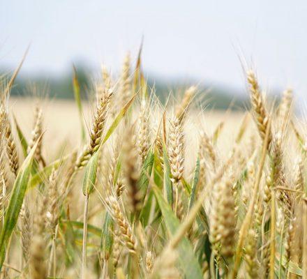 Carbon Neutral Agriculture