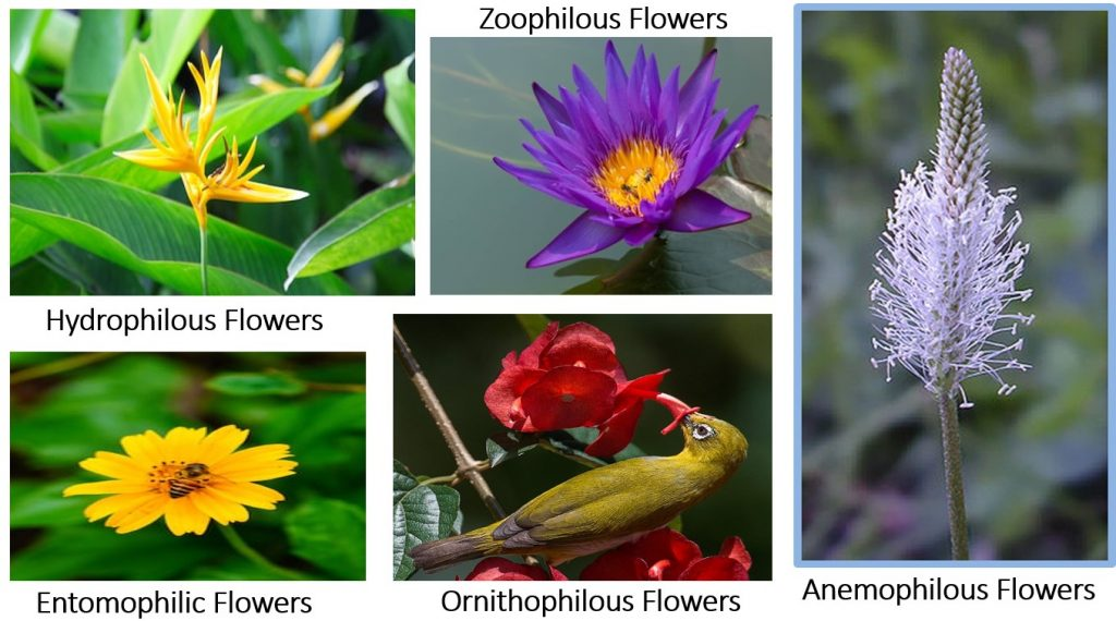 Cross Pollinating Flowers