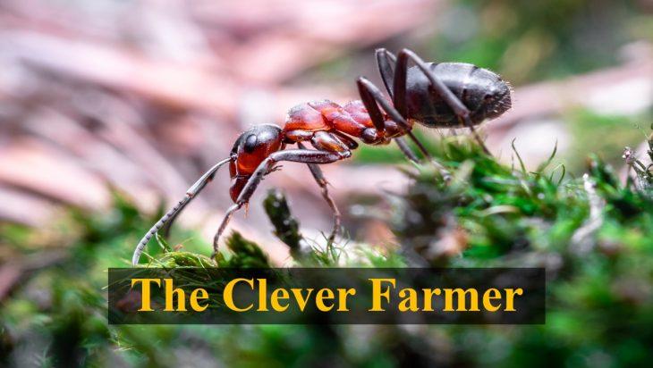 fungal ants