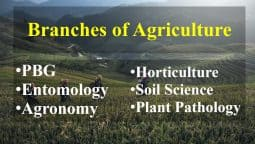 Branches of Agriculture