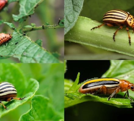 Plant, Land, and Pest Diversity Relationship