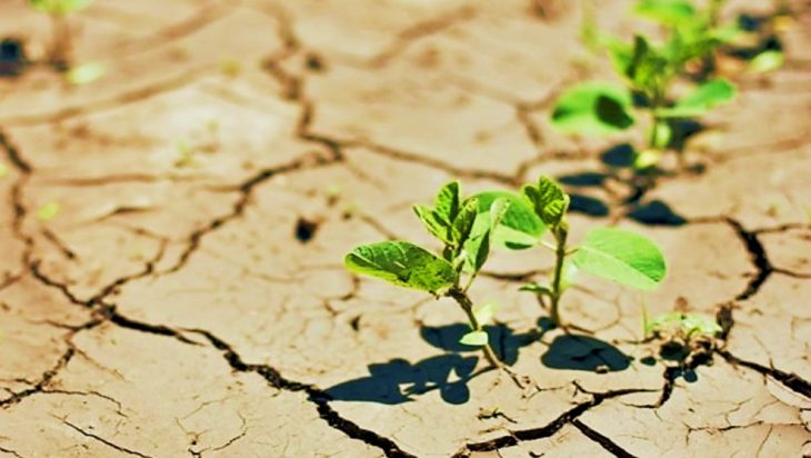Effect of Climate Change on Food