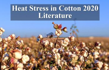 heat stress in cotton 2020