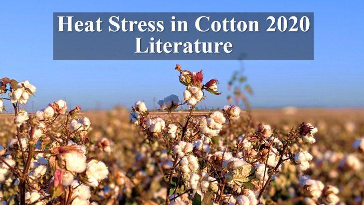 heat stress in cotton 2020