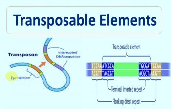 Transposable Elements