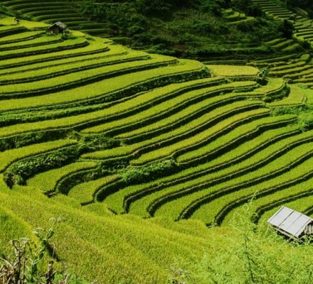 why is terracing used in southeast asian agriculture