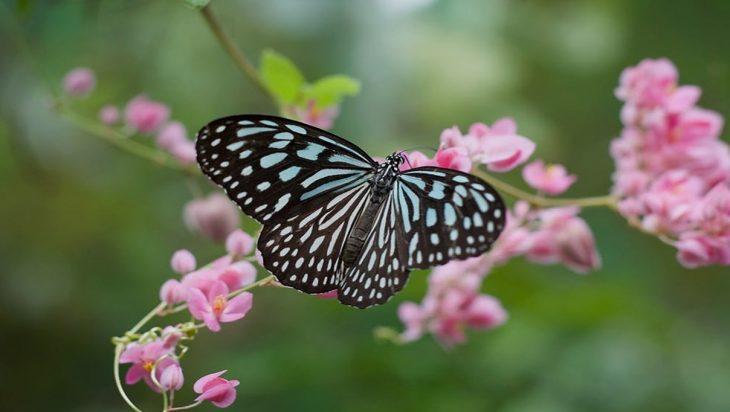 How High Do Butterflies Fly?