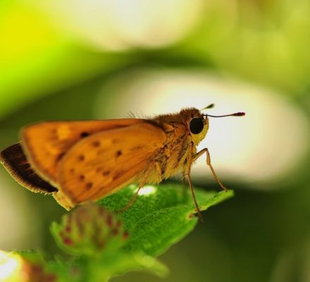 Why Are Moths Are Attracted to Light