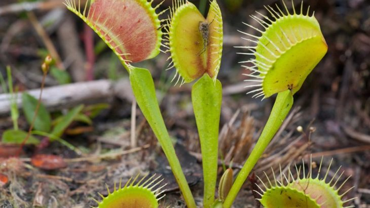Plant Stress Memory