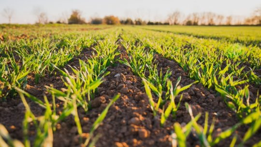 farmer and regenerative agriculture