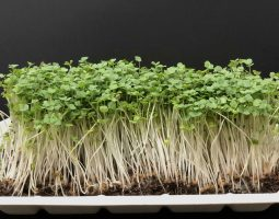 nutrients and microgreens