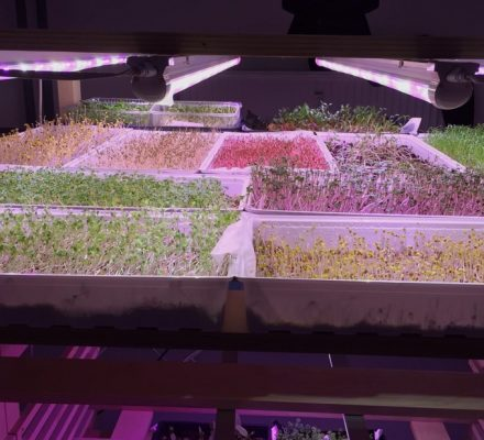 lighting for microgreens