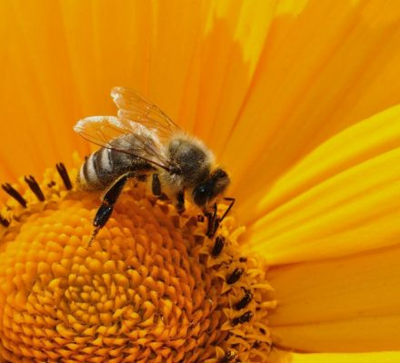 Humidity Is An Invisible Attractant For Bumblebees