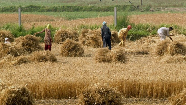 'Insufficient' Rs 12 Billion For Agriculture, Says Senate Committee