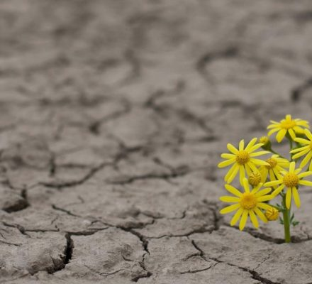 Newly Discovered Genes Can Aid Plants In Surviving Drought