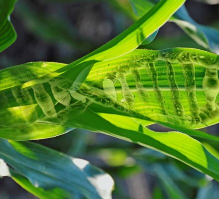 Plants Are Able To Express Specific Genes Thanks To CrisprCas9