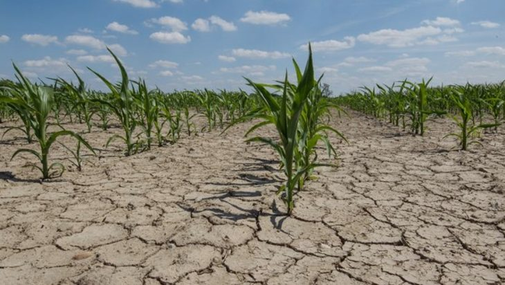 A Drought-Related Agricultural Disaster Is Declared In The County