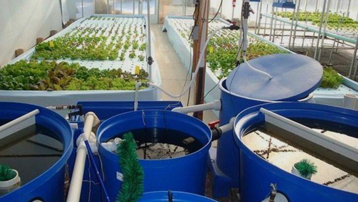 Advanced Monitoring Of Aquaponics