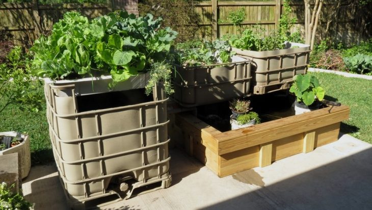Aquaponics And Biodegradable Insecticides
