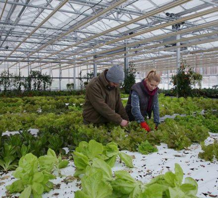 Aquaponics And Urban Horticulture