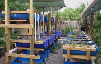 Aquaponics Commercial Challenges In Europe