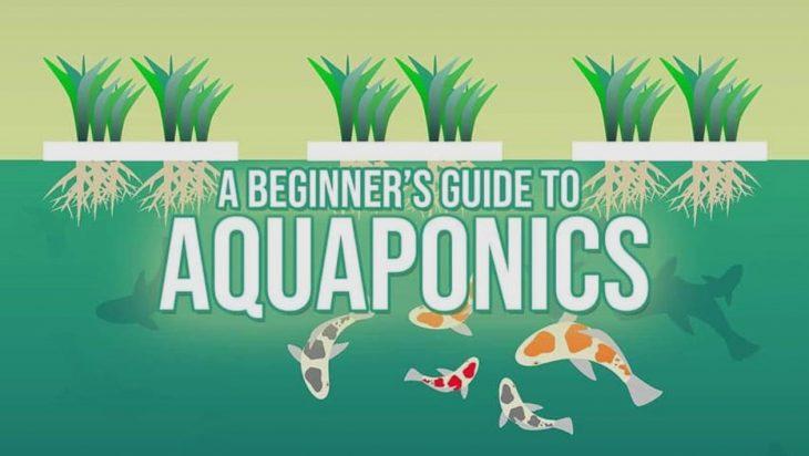 Aquaponics Guide