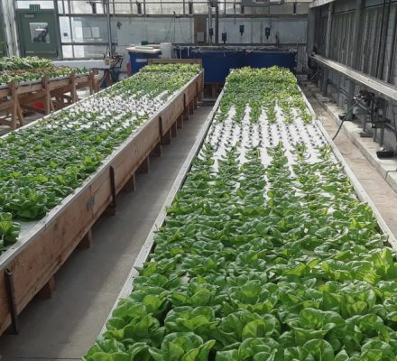 Aquaponics Microbiome and Bacterial Ecosystem