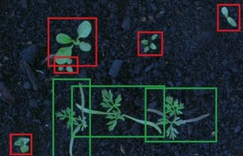 Automated System By Stealth Improves Weed Detection