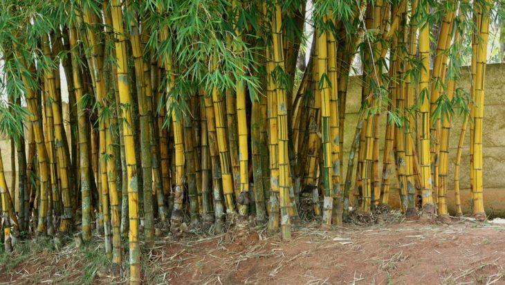 Bamboo World Tree-Grass