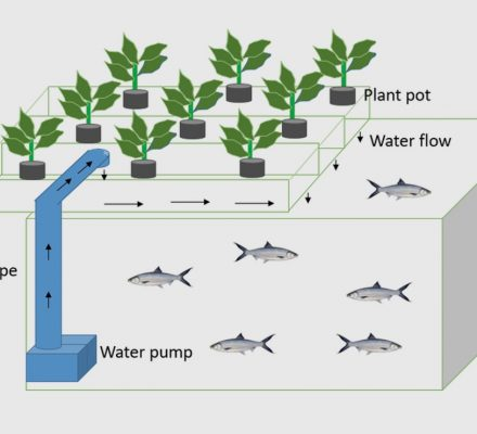Challenges And Opportunities Of Smart Aquaponics