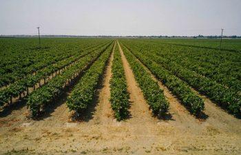 Crop Development In The Delta Region