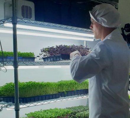 Devon Microfarmers Grows The Tastiest Microgreens You Can Imagine