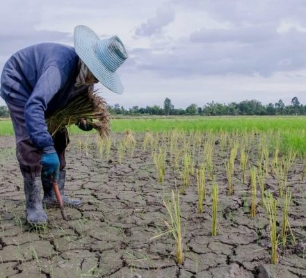 Impacts Of Climate Change On Agriculture In Kenya