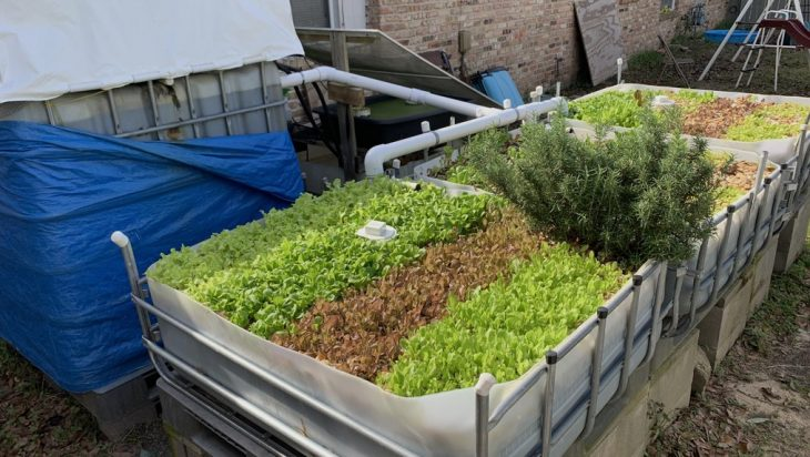 Integrated Pest And Disease Management System For Aquaponics