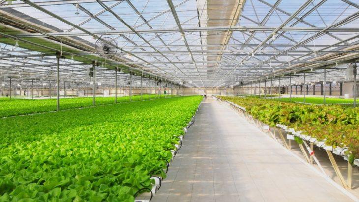Malaysia's Aquaponics Revolutionizes Farming