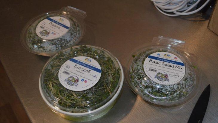 Microgreens Grower In Berks Has Increased Due To Pandemic