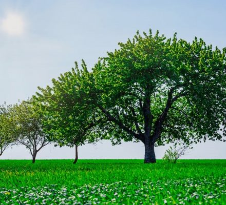Plant A Tree, Leave A Legacy