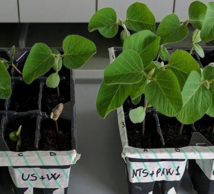 Plasma Agriculture and Plants Ecosystem