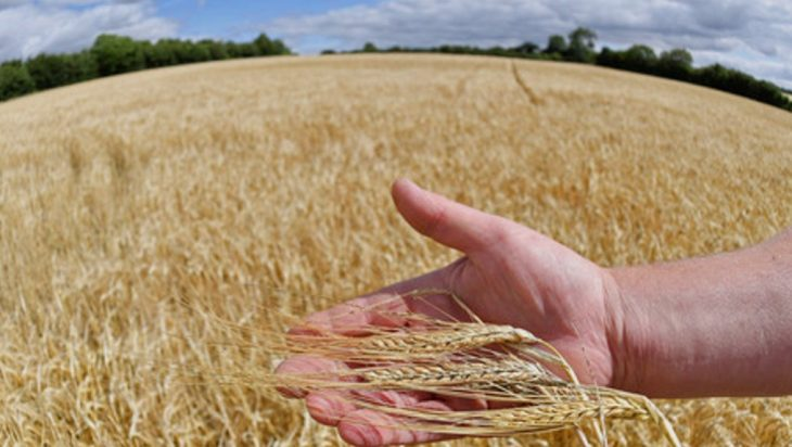 Sustaining Global Agriculture And Food System