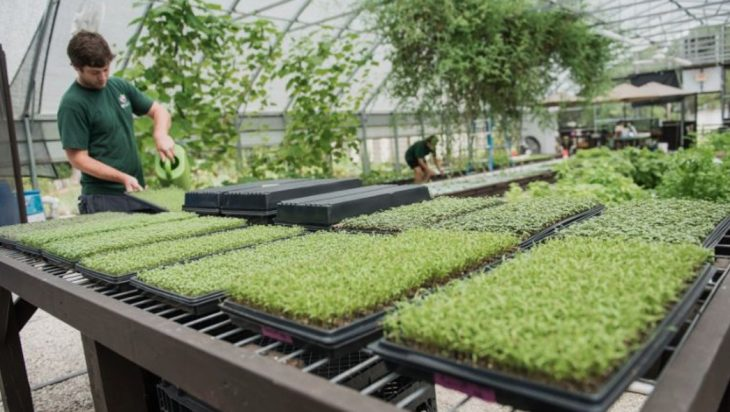 The Year-round Secret To Growing Microgreens