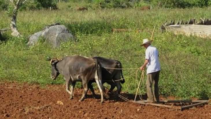 Animal Agriculture And Neolithic Revolution
