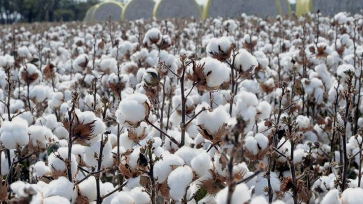 Cotton Spot Prices For Crop 2020-21