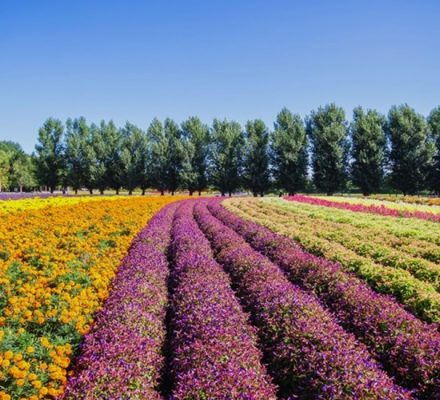 GB Floriculture Industry Would Boost Women Entrepreneurship