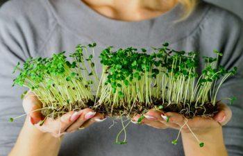 Global Microgreens Market Trends