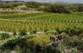 Regenerative Agriculture Criticism