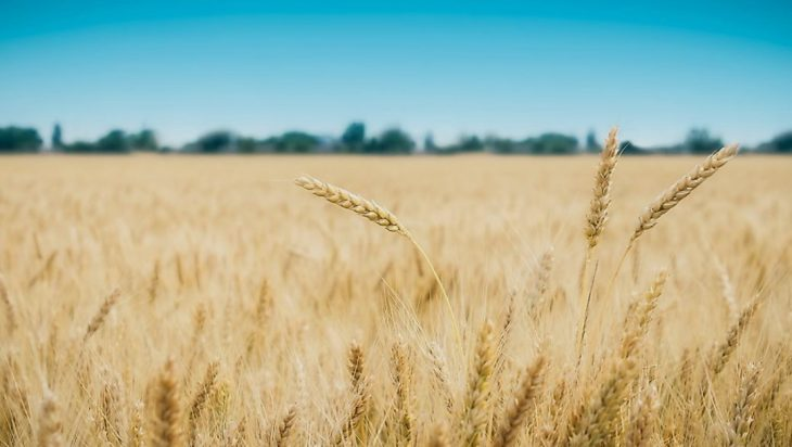 Top Six Crops In Pakistan Have Grown