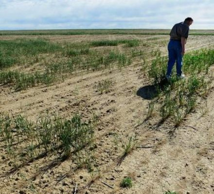 Agricultural Resilience And Drought