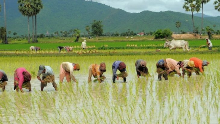 Agriculture Sustainability and Paddy Farmers