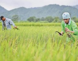 China And Philippines Exploring Deeper Agricultural Cooperation